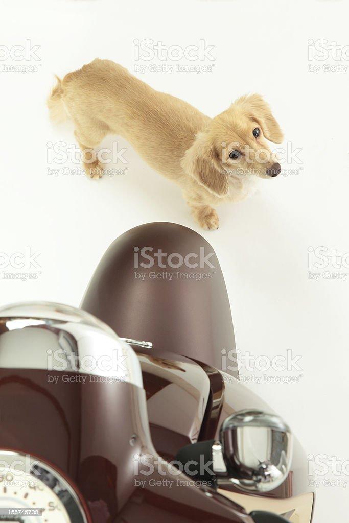 Bike and dog royalty-free stock photo