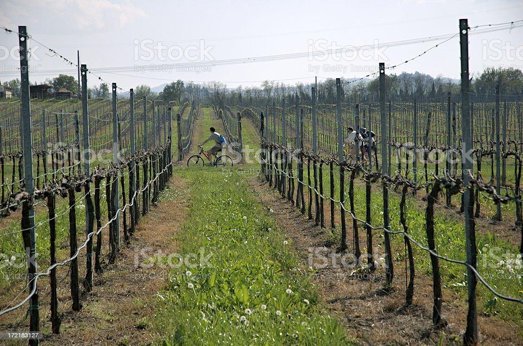 bike and vine royalty-free stock photo