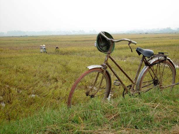 Bicicleta en un campo de arroz - foto de stock