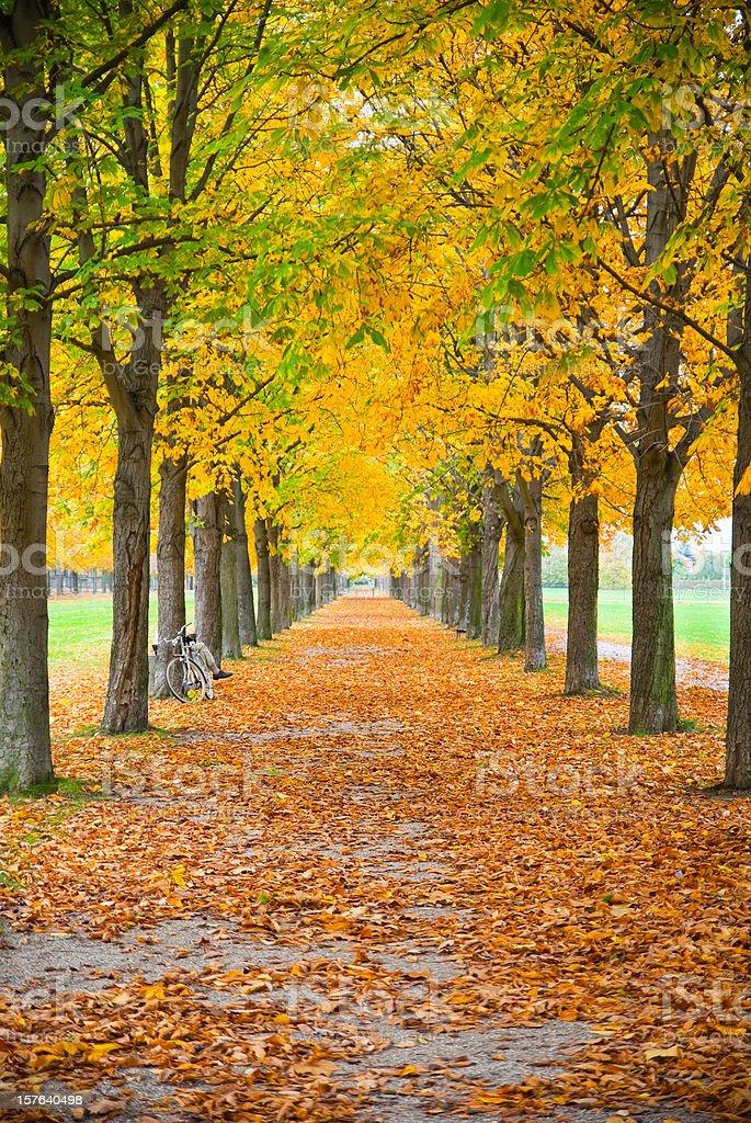 Bike in autumn royalty-free stock photo