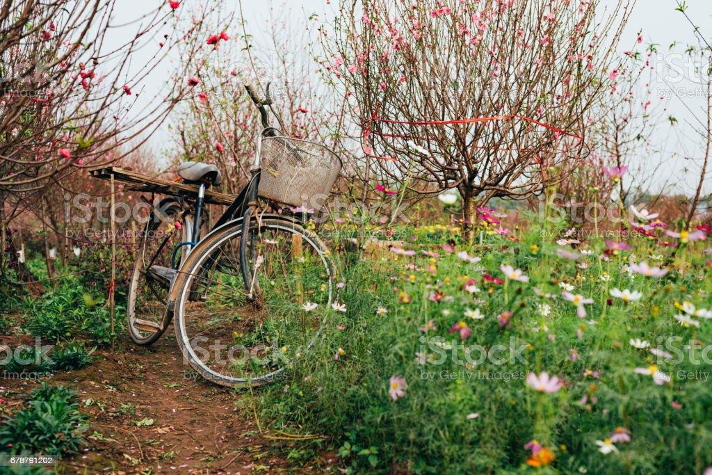 Bike in the garden royalty-free stock photo