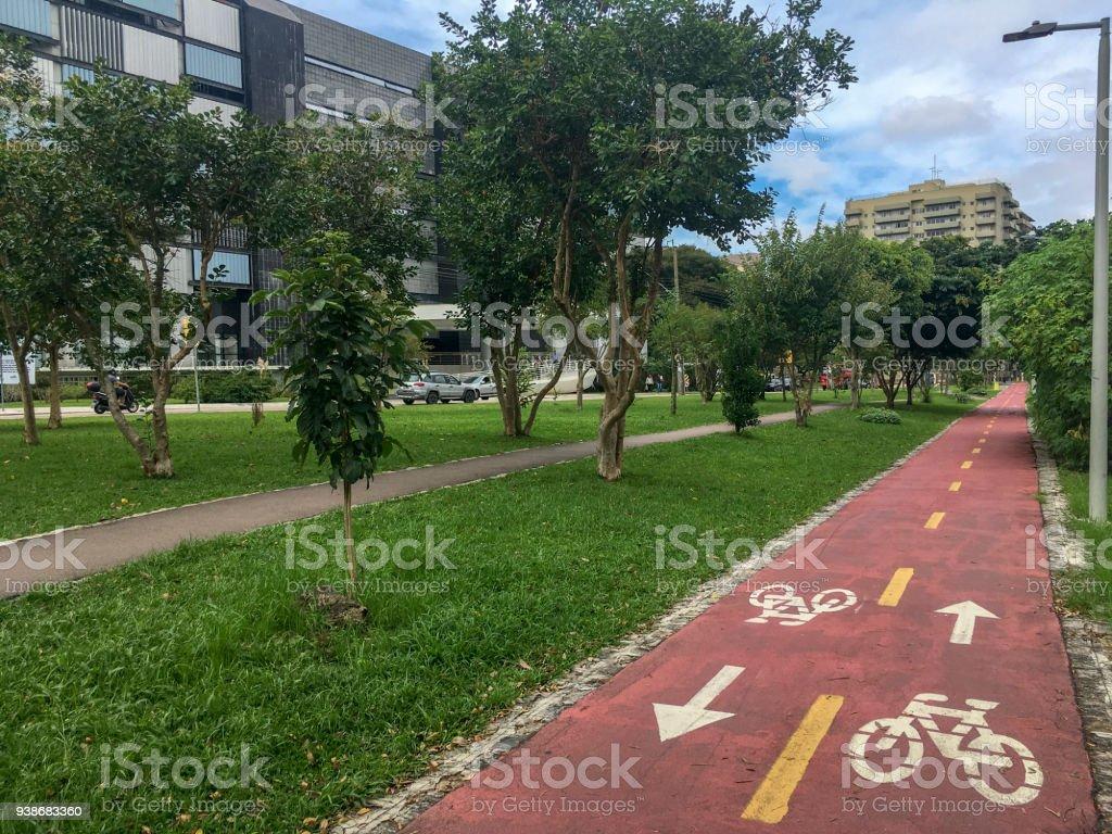 Radweg durch einen Baumbereich in Curitiba, Brasilien – Foto
