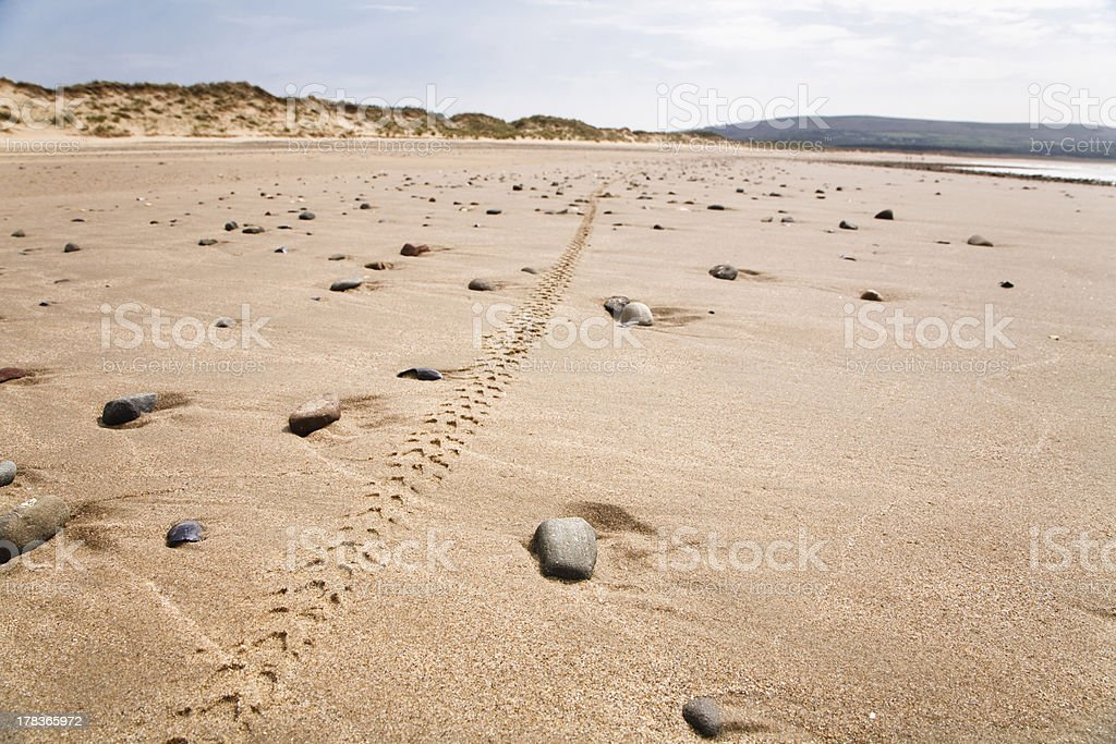 Bike track in landscape - Royalty-free Beach Stock Photo