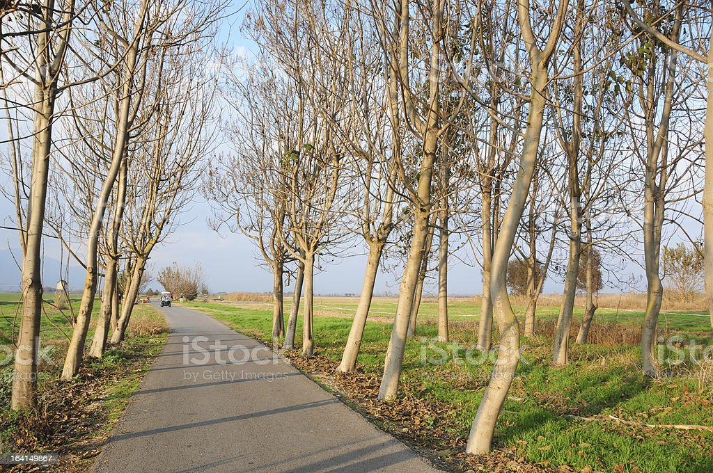 Bike Trail in Hahula Valley, Northern Israel stock photo