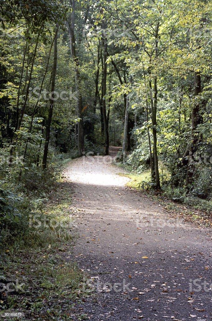 Bike Trail through the trees stock photo