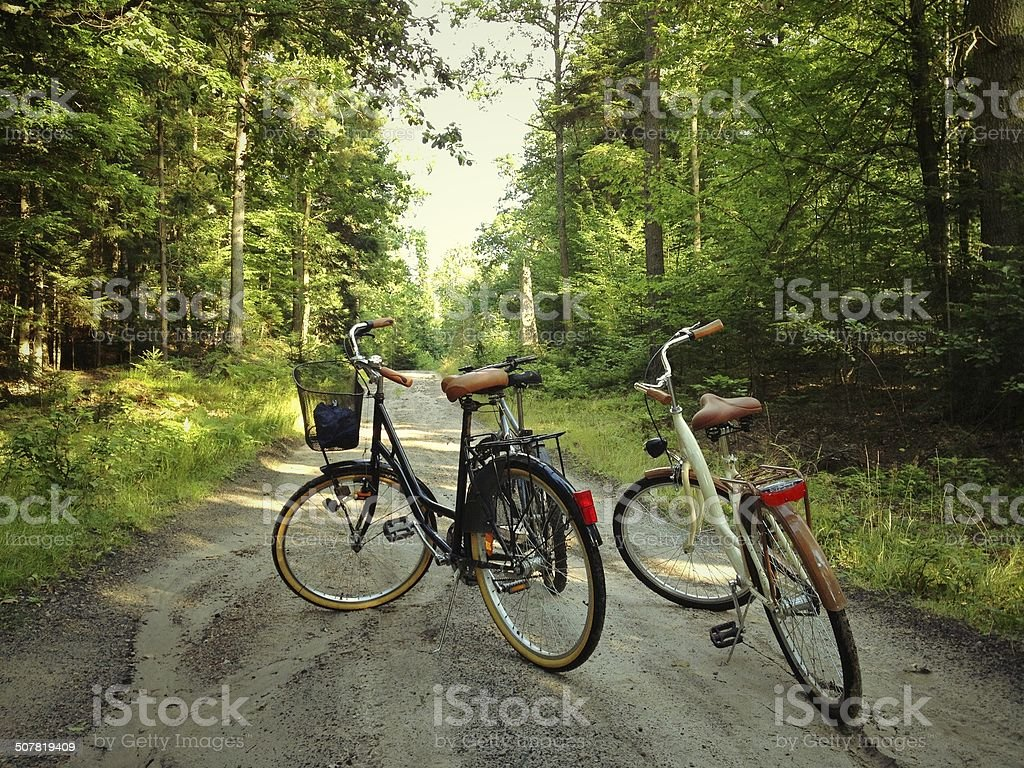 bikes in the forest stock photo