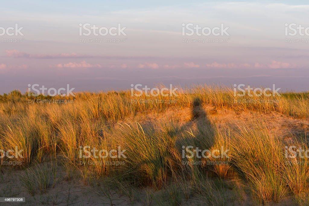 Biking around the Dutch Seaside foto