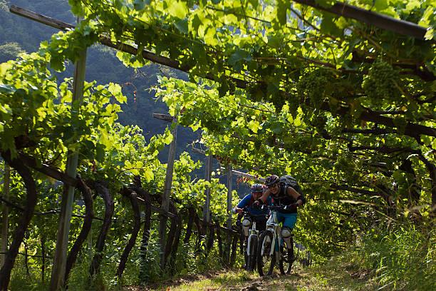 Bike the vineyard, Südtirol – Foto