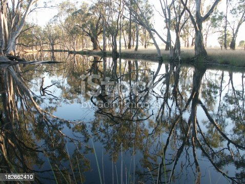An Australian billabong just after sunrise. A billabong is an isolated area of a river.