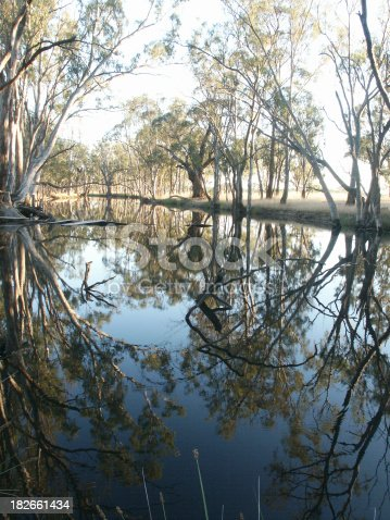 An Australian billabong at sunrise. Calm and reflective image. (A billabong is an isolated part of a river)