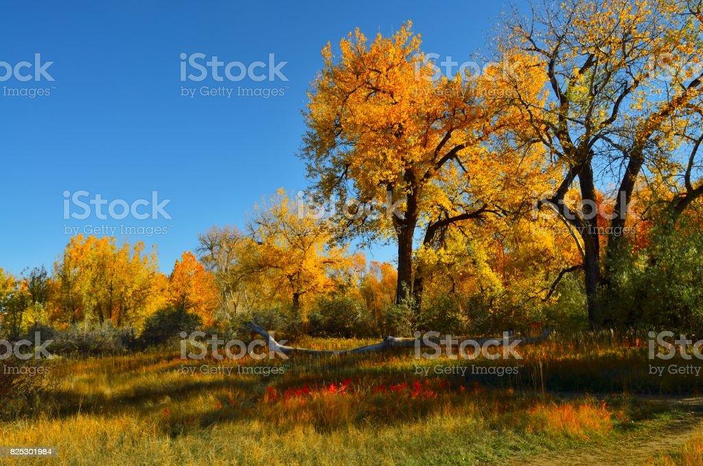Billings Riverfront Park Hillside and Fallen Tree stock photo