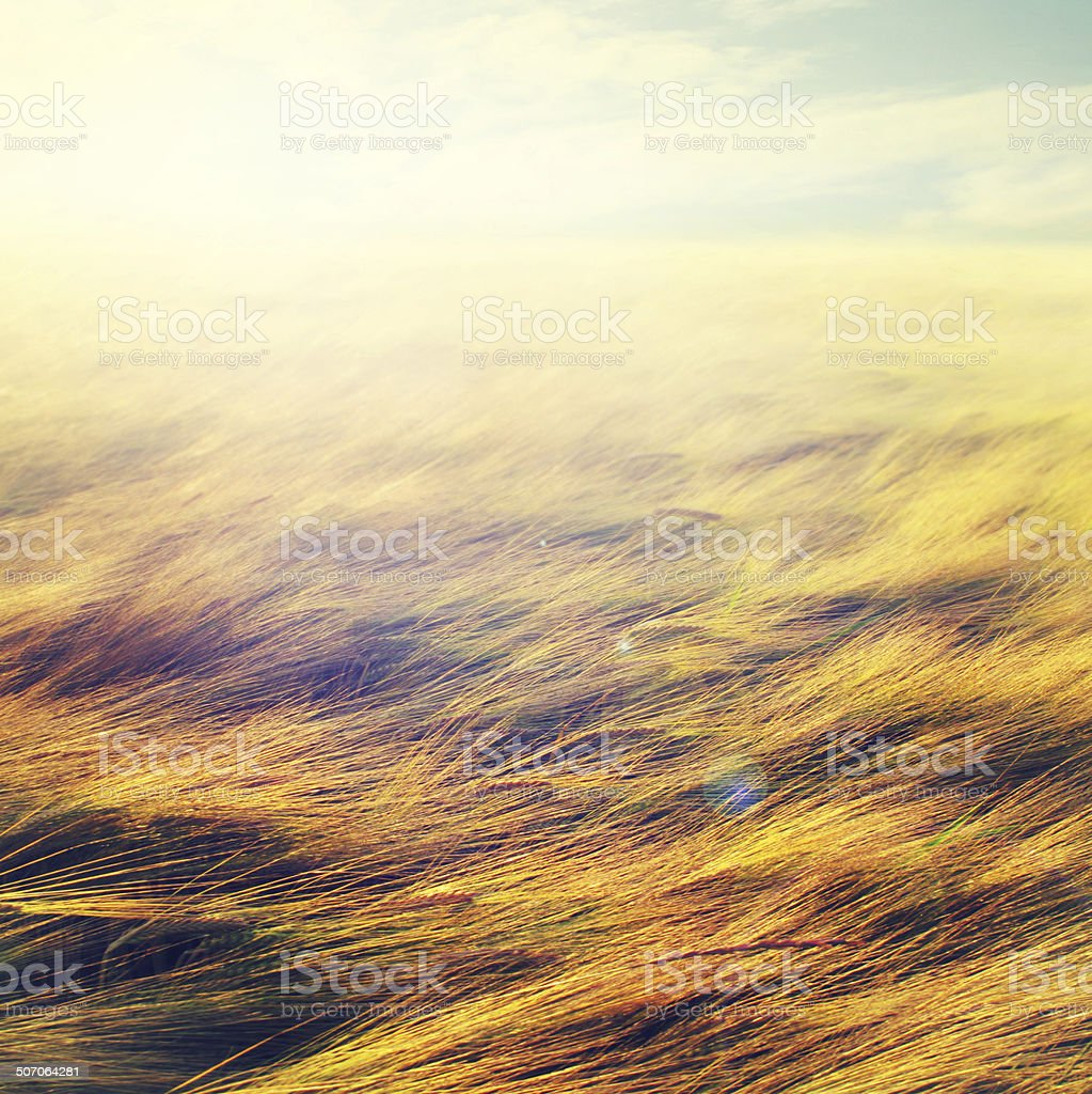 Billowing in the wind stock photo