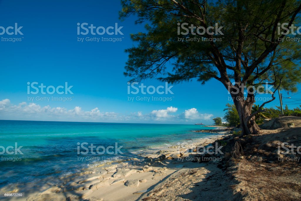 Bimini island with trees on beach stock photo