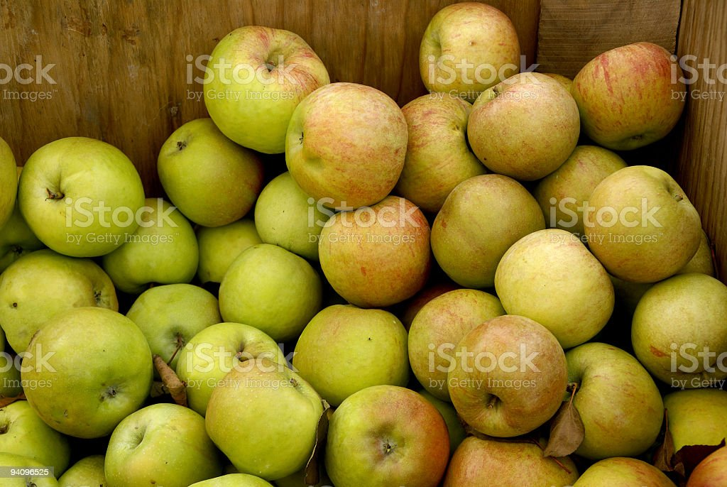 Bin of Crispin Apples royalty-free stock photo