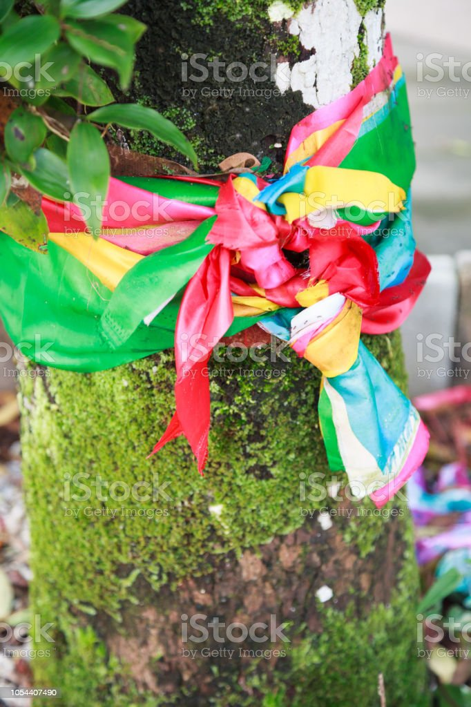 binding or tying tricolor or seven colors holy fabric decor around old aged ancient tree. Religious Belief, Tradition, Signs and Symbols, Rituals, Ceremonies in Brahman, Buddhism, Hinduism religions. stock photo