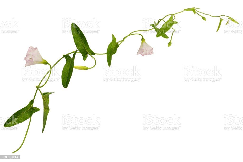 과학과 꽃과 장식 나뭇잎 royalty-free 스톡 사진