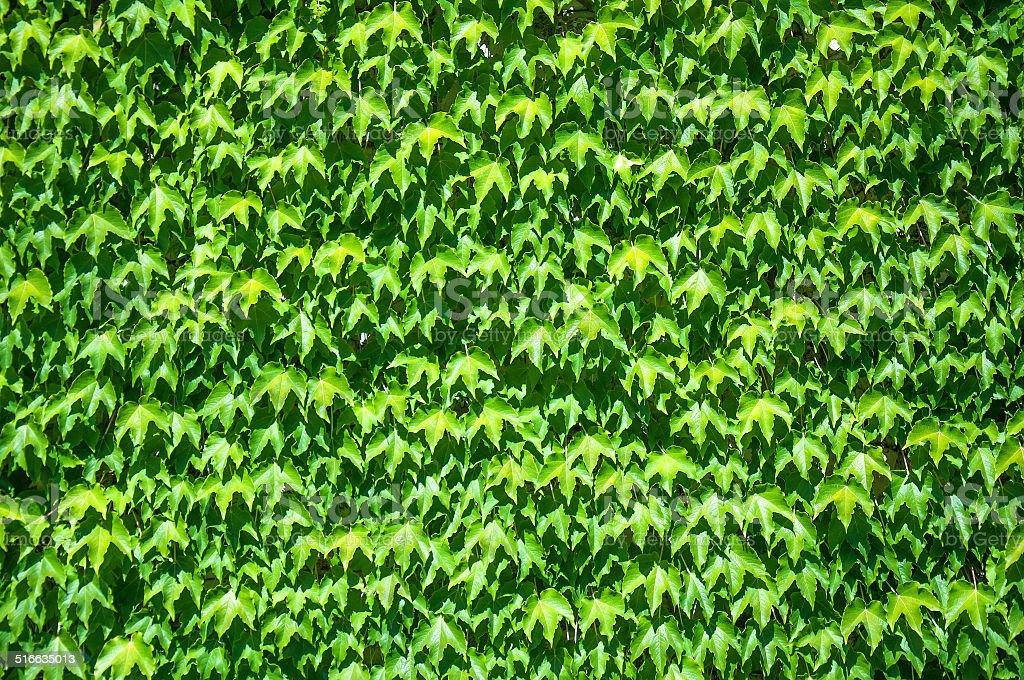 Bindwind wall stock photo
