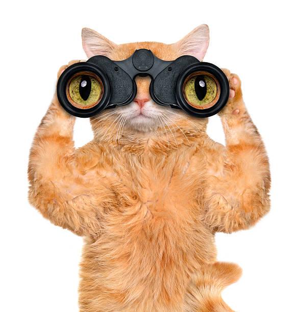 fernglas katze gesucht, und beobachten sie mit uns. - suche katze stock-fotos und bilder