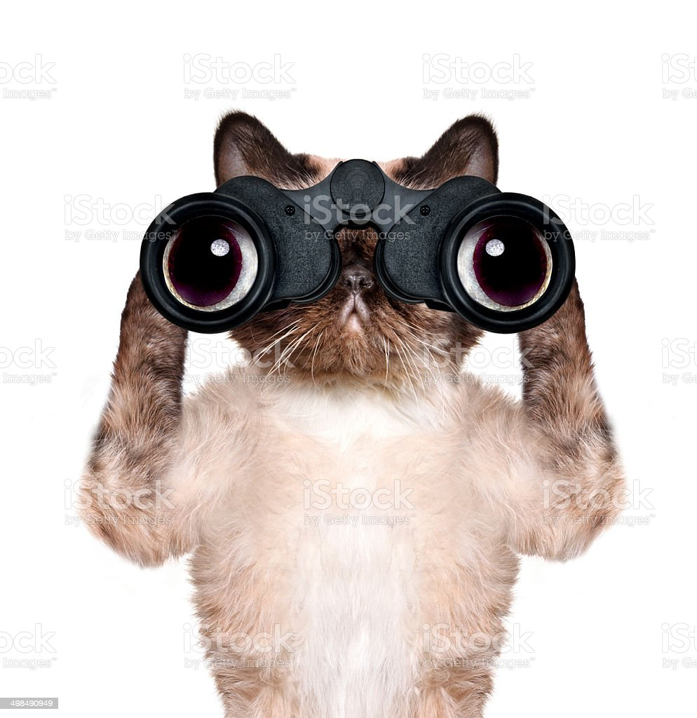 13c8836a binoculars cat searching, looking and observing with care royalty-free  stock photo