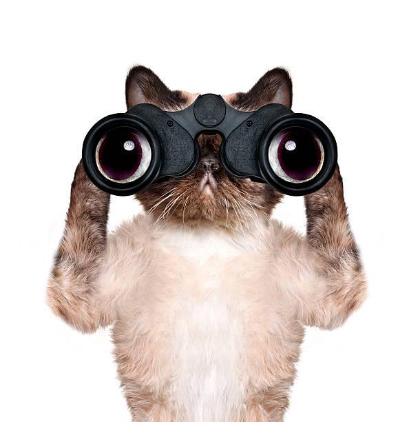 fernglas suchen suchen, und katze beobachten um - suche katze stock-fotos und bilder