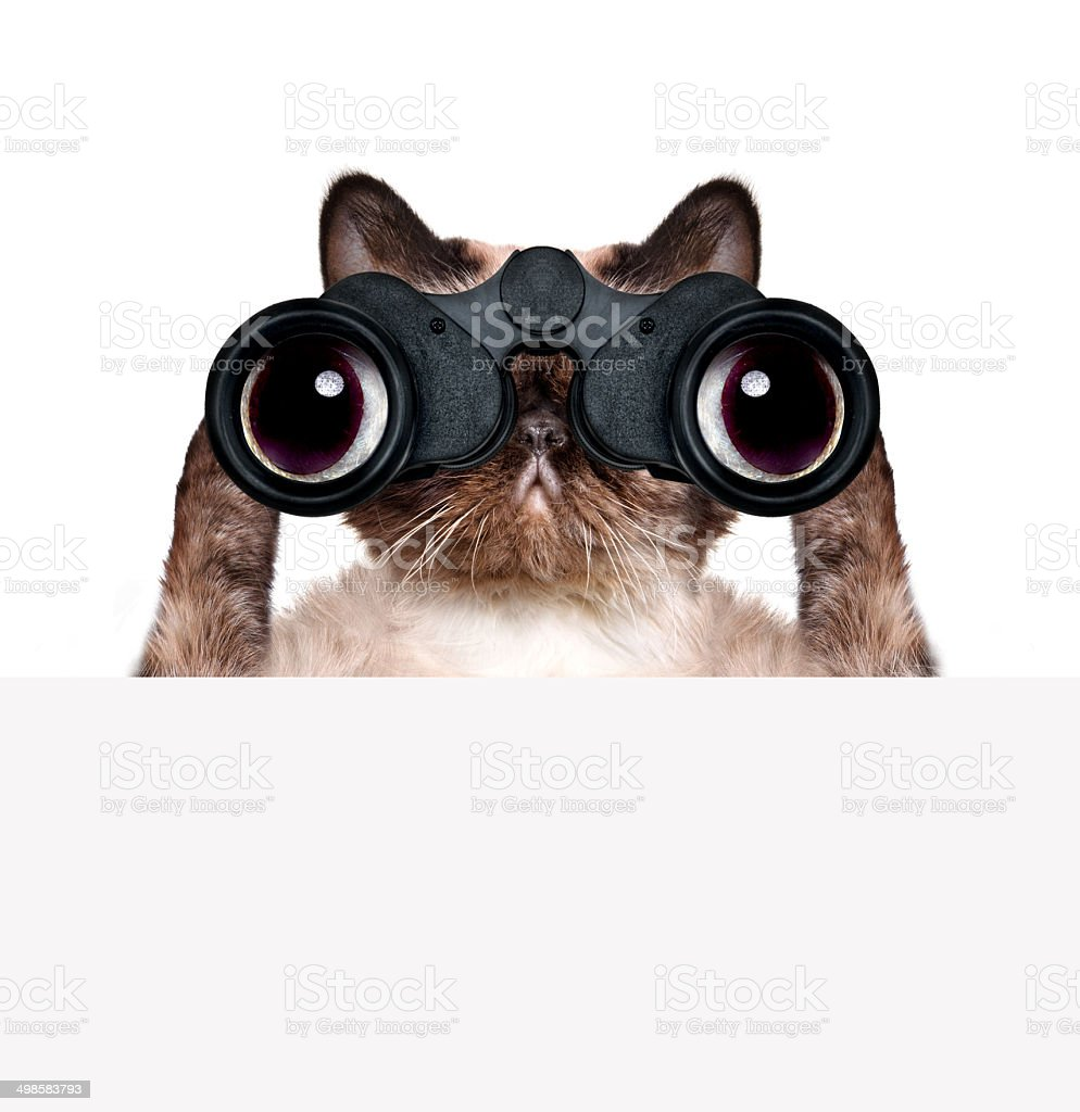 binoculars cat searching, looking and observing with care stock photo