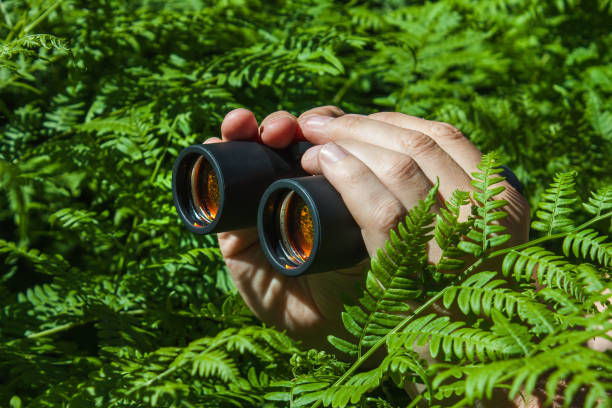 Binoculars in hand from the bushes Binoculars in hand peeking from the bushes ambush stock pictures, royalty-free photos & images