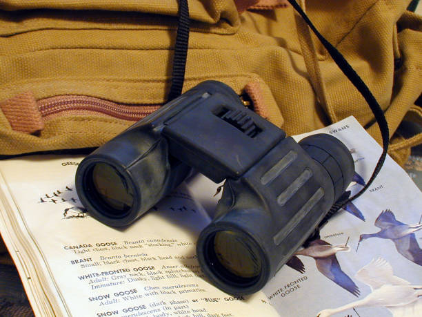 binoculars resting on birdbook and backpack stock photo