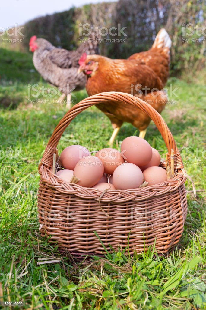Bio Eier stock photo
