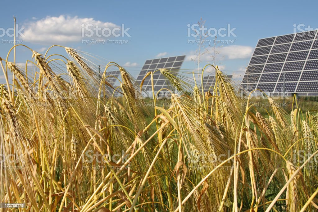 Bio Energy royalty-free stock photo