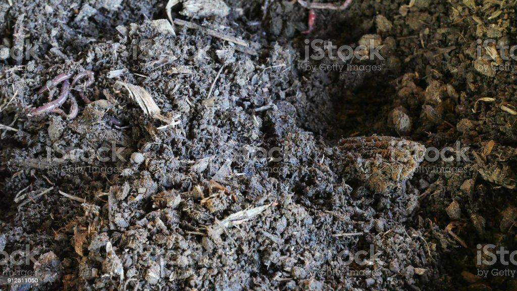 Bio fertilizer earthworm agricuture concept. stock photo