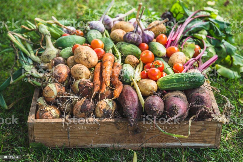 바이오 음식입니다. 정원 생성 그리고 수확된 야채입니다. 나무 상자에 신선한 농장 야채 - 로열티 프리 가을 스톡 사진
