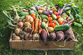 Bio food. Garden produce and harvested vegetable. Fresh farm vegetables in wooden box