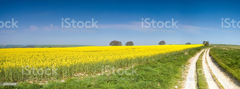 Biodiesel crop royalty-free stock photo