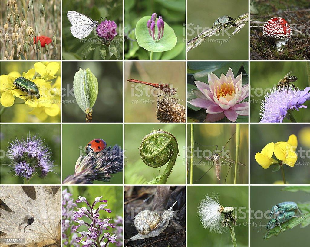 collage de la biodiversidad - foto de stock