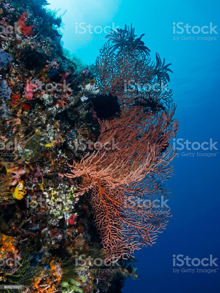 Biodiversity in the coral reef, Artenvielfalt im Korallenriff stock photo
