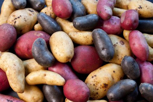 istock biodiversity - variety of potatoes 171147109