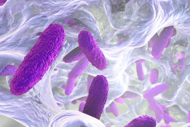 Biofilm of Klebsiella bacteria stock photo
