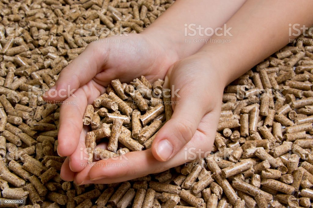 Biofuels Alternative Biofuel From Sawdust Wood Pellets In Hand The Cat Litter Stock Photo Download Image Now Istock