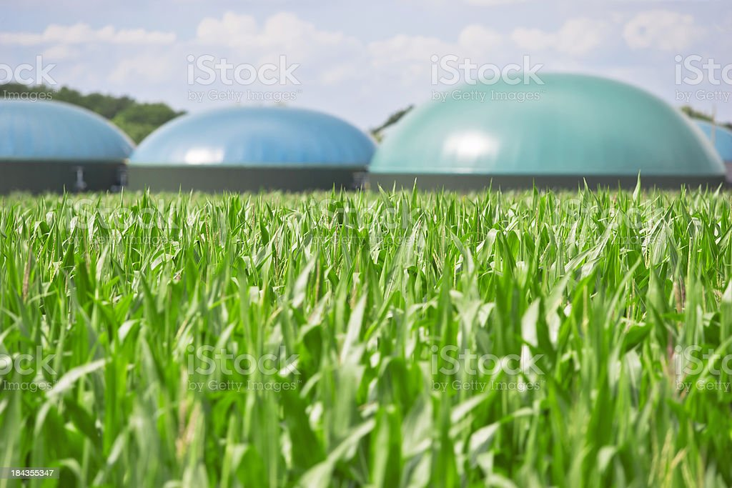 Biogas energy Lots of corn and a biogas energy plant in the back. Focus on corn. XXL size image. Agricultural Field Stock Photo