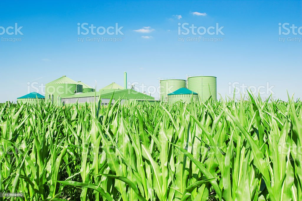 Biogas plant and corn stock photo