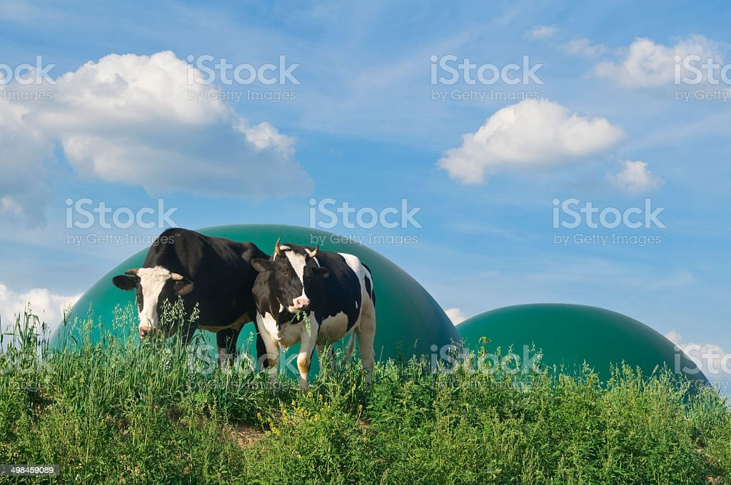 Biogaz et de deux vaches - Photo