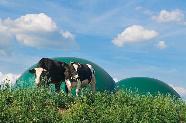 Biogas plant and two cows stock photo