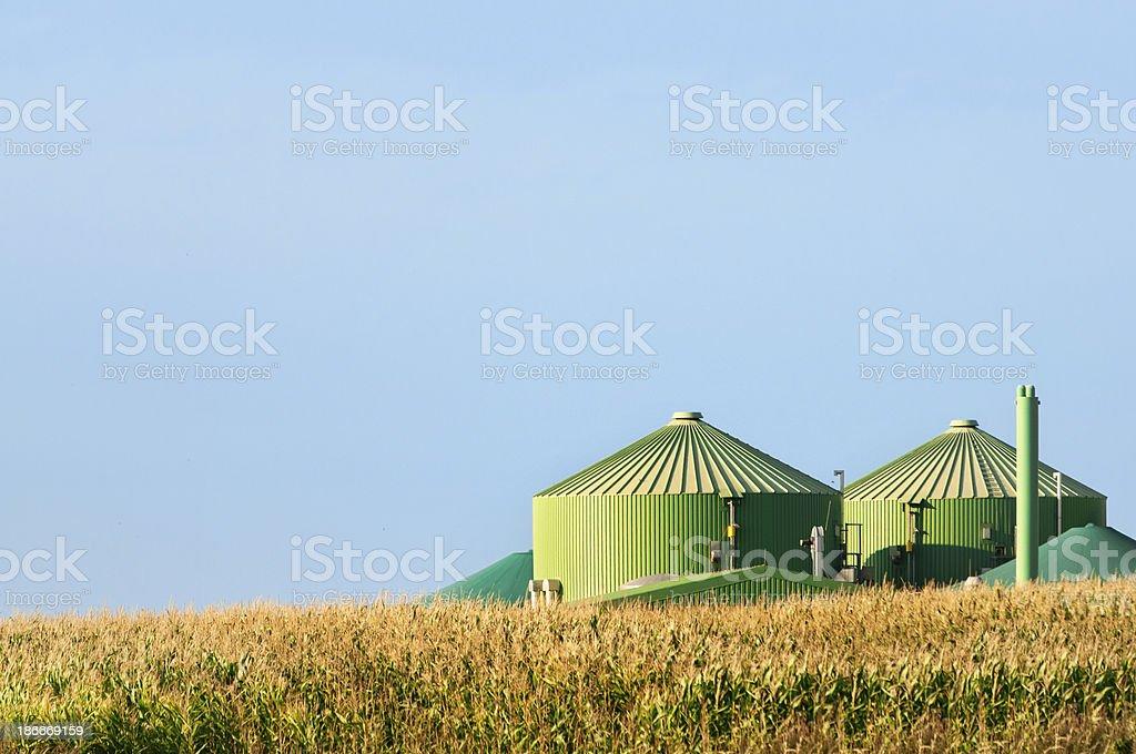 Pflanze hinter corn field Biogas fahren – Foto