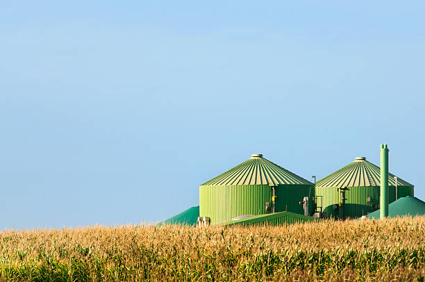 Biogas plant behind corn field stock photo