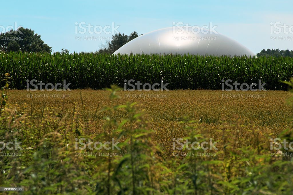 biogas plant in a corn field against the blue sky stock photo