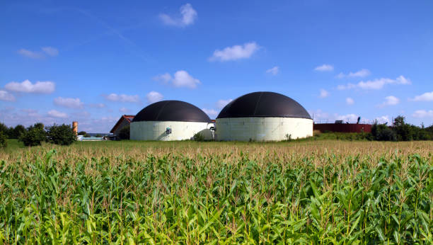 Biogas plant in a maize field stock photo