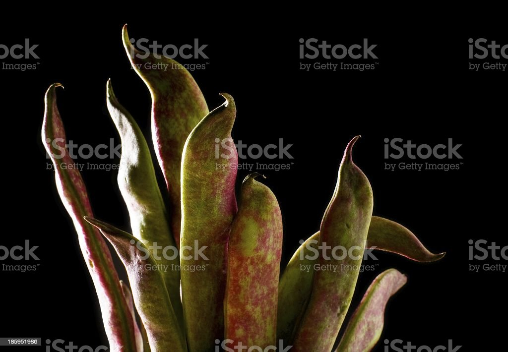 Biological Green Beans stock photo