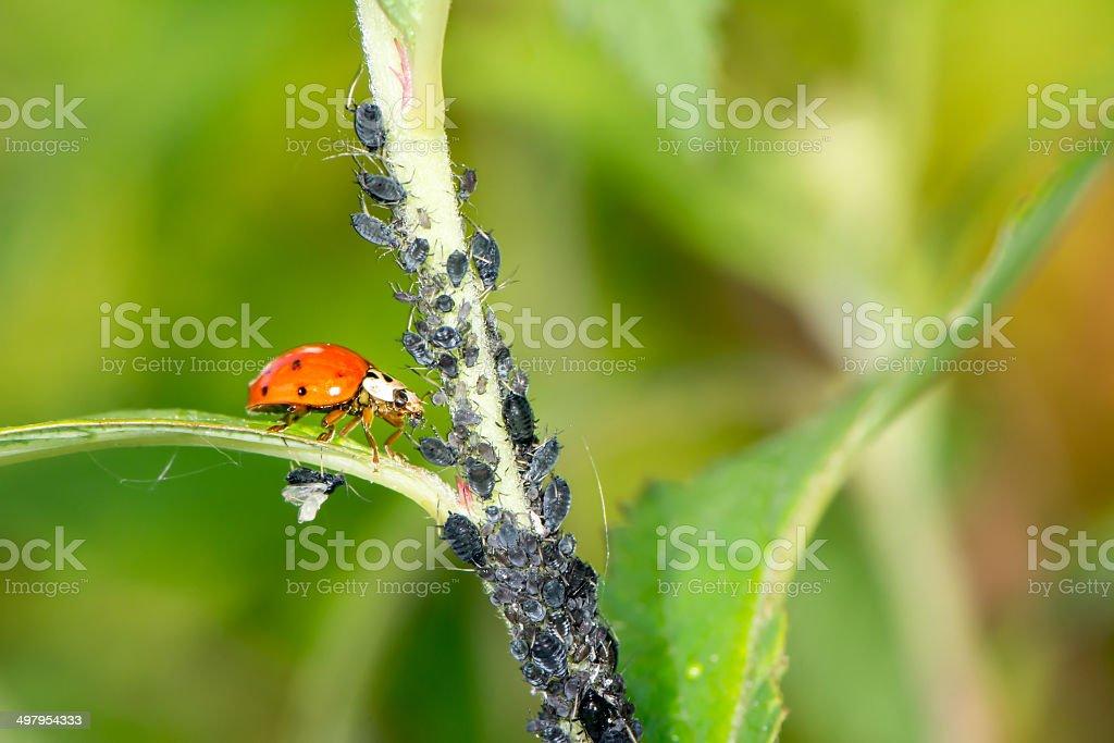 Biological Pest Control stock photo