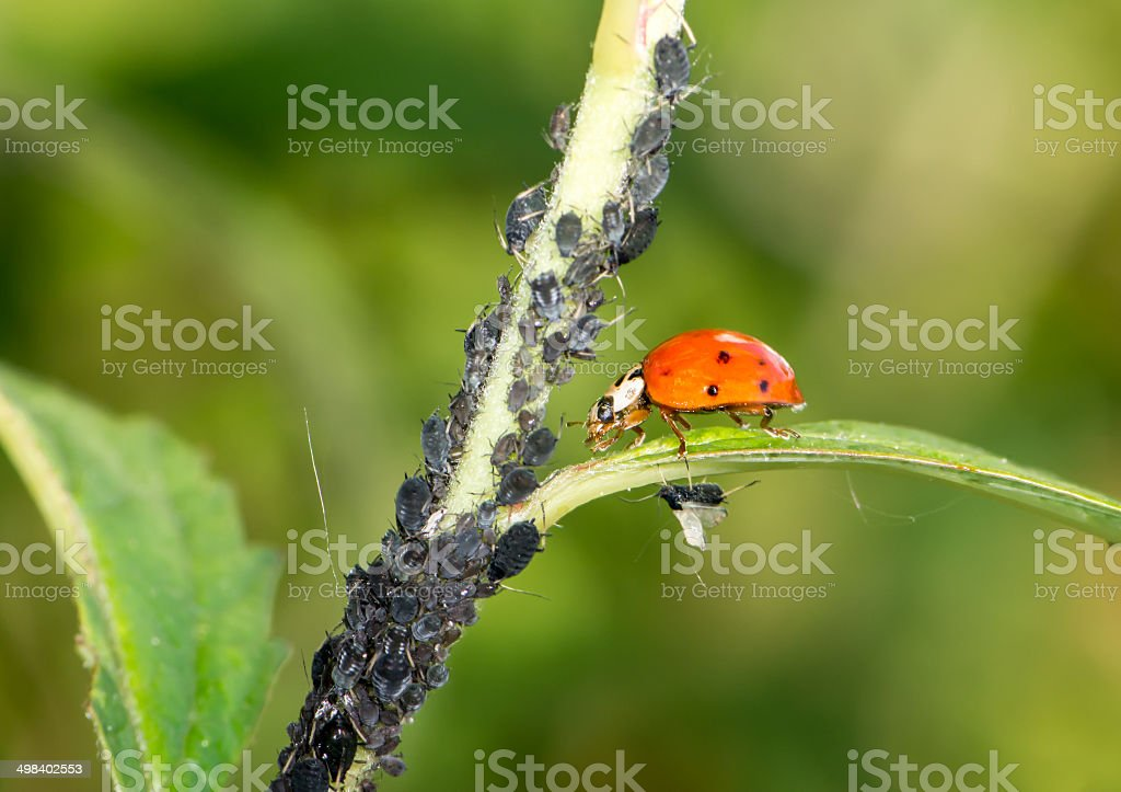 Biological Pest Control stock photo