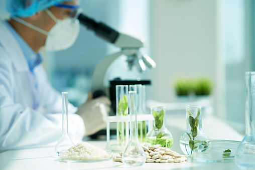 White beans and green leafs in flasks on the table with biologist in the background